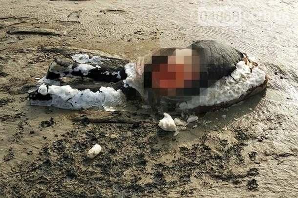 В Одесской области нашли растерзанный труп женщины